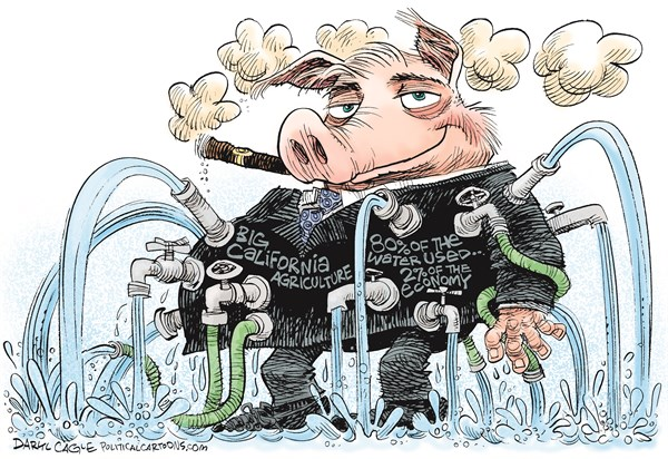California Agriculture Water Hog © Daryl Cagle,CagleCartoons.com,pig, hog, farm, farmers, agriculture, water, drought, California, 80% of the water used, 2% of the economy