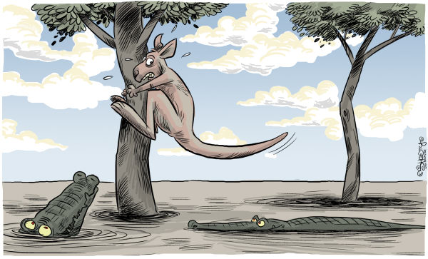 Martin Sutovec - Slovakia - Australia today COLOR - English - Australia, floods, Kangaroo