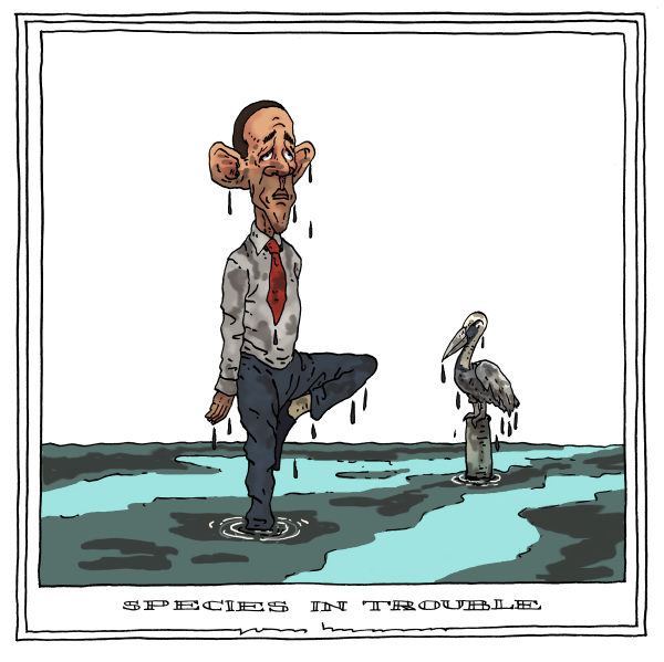 Joep Bertrams - The Netherlands - species in trouble - English - obama, louisiana, oil spill, oil slick, species, birds in trouble