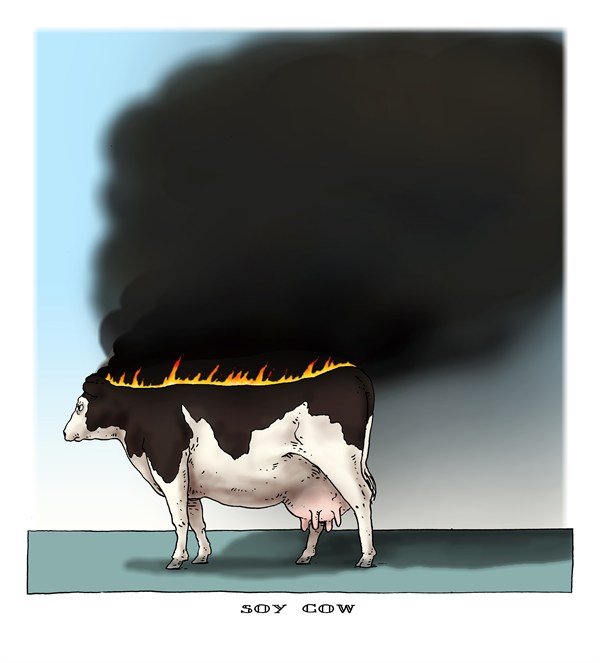 127273 600 soy cow cartoons