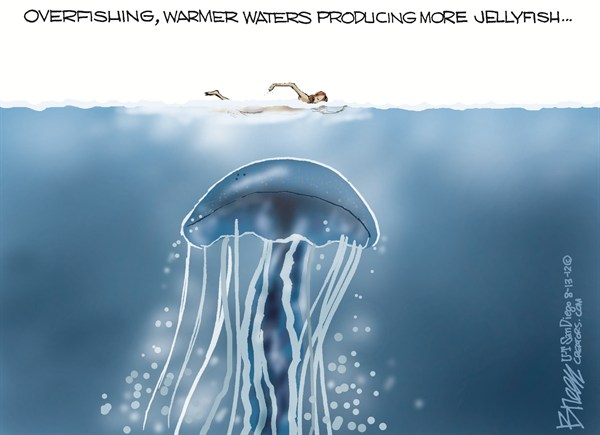 116906 600 More Jellyfish cartoons