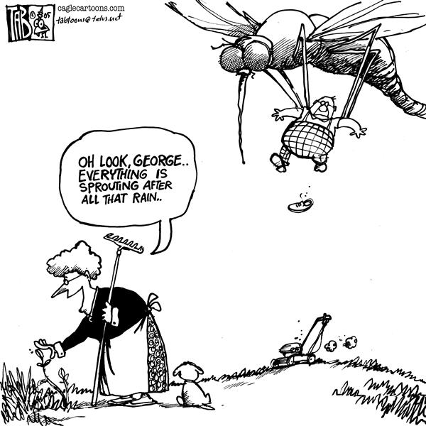 Tab - The Calgary Sun - Mosquito - English - Mosquito summer, garden, weather, vacation, bugs