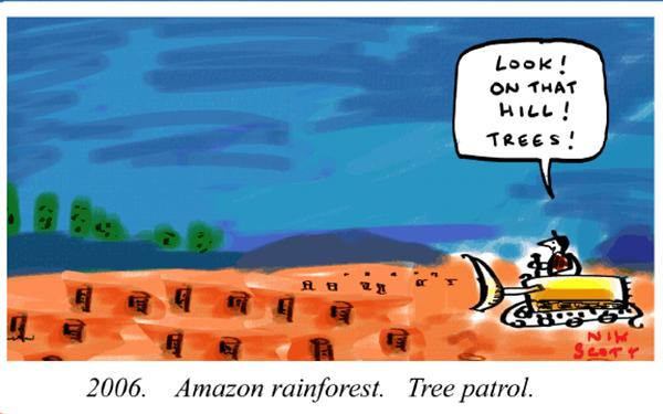 Nik Scott - Australia - Amazonian Tree Patrol - English - amazon rainforest tree