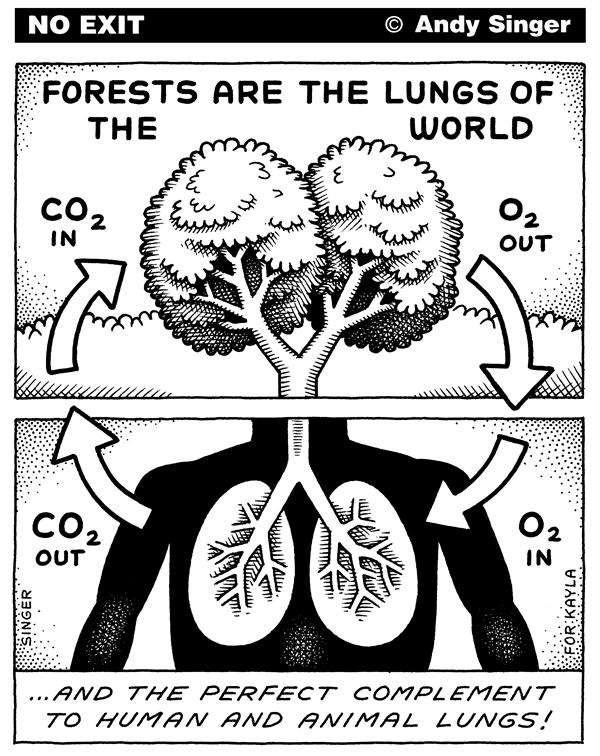Andy Singer - Politicalcartoons.com - Forests are the Lungs of the World - English - forest,forests,tree,trees,carbon,dioxide,oxygen,photosynthesis,lung,lungs,rainforest,rainforests,rain,environment,environmental,global,warming,greenhouse,effect,gases,climate,change,carbondioxide,air,atmosphere,deforestation,logging,clear,cut,cutting