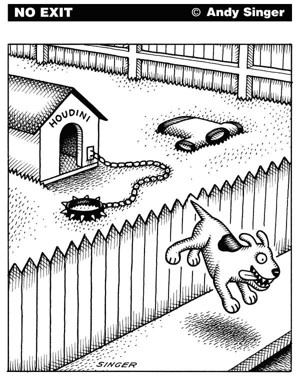 Andy Singer - Politicalcartoons.com - Houdini Dog Escapes - English - dog,dogs,canine,canines,pet,pets,animal,animals,houdini,Harry,Houdini,harry,escape,escapes,artist,artists,escaping,escapist,collar,sweater,sweaters,collars,chain,chains,yard,yards,fence,fences