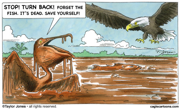 79427 600 Brown Pelican warns Bald Eagle cartoons
