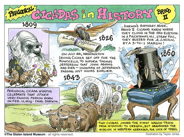 131385 600 History of 17 year Cicadas   Part 1 cartoons