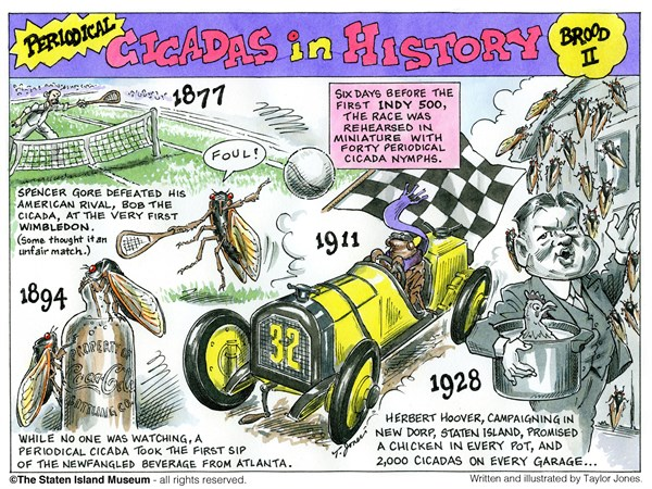 131437 600 History of 17 year Cicadas   Part 2 cartoons