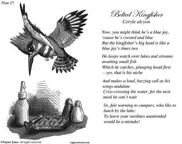 Taylor Jones Field Guide for the Birds   Plate 27 © Taylor Jones,Politicalcartoons.com,		belted,kingfisher,birds,birding,birdwatching,ornithology,nature,conserevation