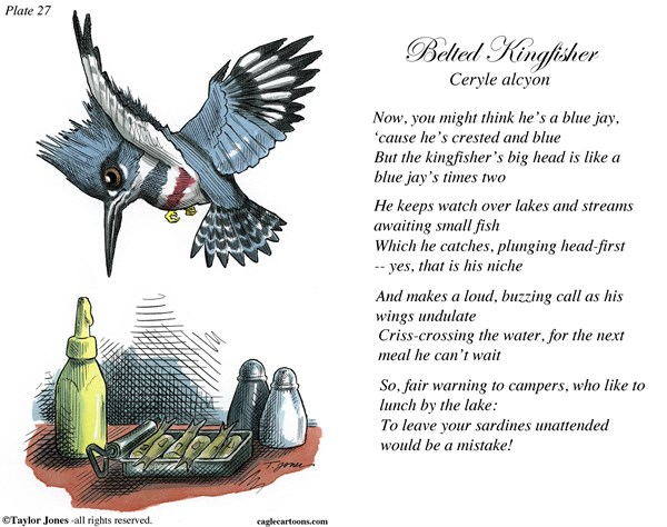 Field Guide for the Birds   Plate 27 © Taylor Jones,Politicalcartoons.com,belted,kingfisher,birds,birding,birdwatching,ornithology,nature,conservation