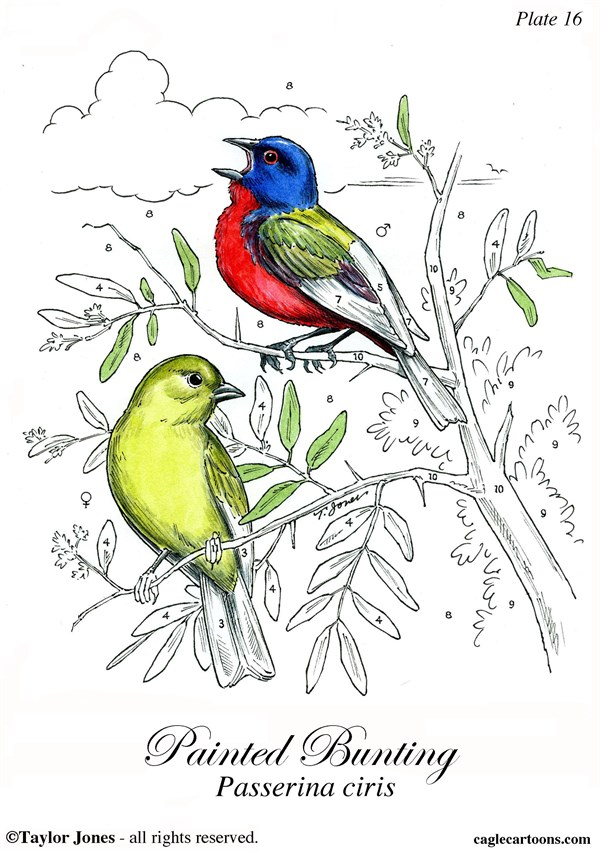 Taylor Jones - Politicalcartoons.com - Painted Bunting - COLOR - English - painted,bunting,migratory,birds,birdwatching,birding,ornithology,nature,conservation