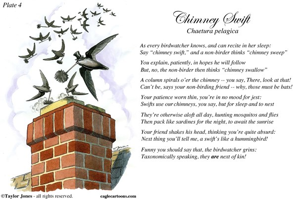 Field Guide for the Birds   Plate 4 © Taylor Jones,Politicalcartoons.com,chimney,swift,sweep,birds,birdwatching,birding,ornithology,nature,conservation