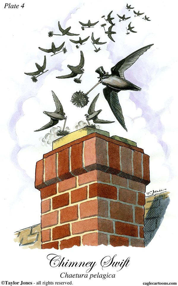 Taylor Jones - Politicalcartoons.com - Chimney Swift - COLOR - English - chimney,swift,sweep,birds,birdwatching,birding,ornithology,nature,conservation