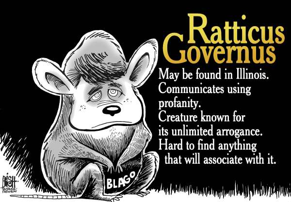 Randy Bish - Pittsburgh Tribune-Review - The Blagojevich Rat, COLOR - English - BLAGOJEVICH,ILLINOIS,GOVERNOR