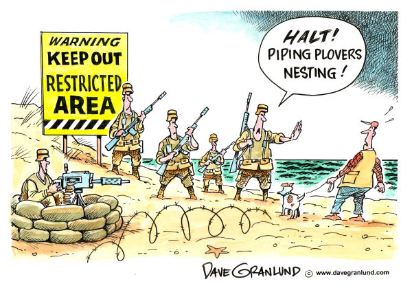 Dave Granlund - Politicalcartoons.com - Endangered Species Protection - English - piping plover, piping plovers, beaches, endangered species, threatened species, birds, nesting birds, atlantic coastal birds, beach restrictions