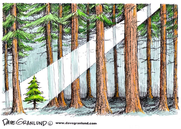 Christmas in the Forest © Dave Granlund,Politicalcartoons.com,		Christmas,christ,christ child,christmas tree,christmas morning,noel,joy,bethlehem,nativity,born,joy to the world,peace on earth,celebration,seasons greetings,seasons greetings,xmas x-mas,25 december,dec 25, jesus, manger, holiday