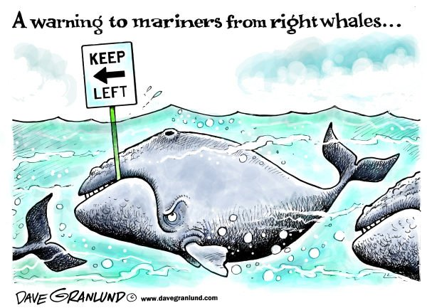 108639 600 Right whale warning cartoons