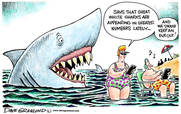 150775 600 Great White sharks multiply cartoons