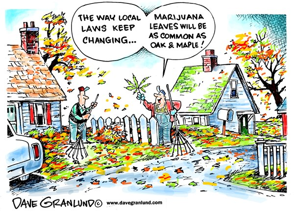 Marijuana laws © Dave Granlund,Politicalcartoons.com,Pot, marijuana, weed, drugs, autumn, fall, raking, trees, plants, laws, pro pot, state laws