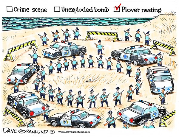 New England beach quiz © Dave Granlund,Politicalcartoons.com,piping plover, plover, endangered, species, birds, bird, ocean, coast, nest, nesting, protection, eggs, protected, closed, restriction, off limits, sand, closures
